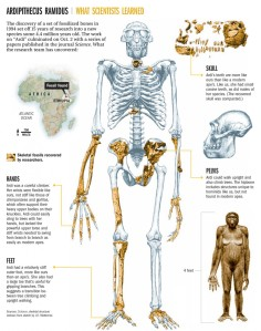 ardipithecus-ramidus-what-scientists-learned