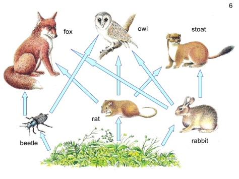 powerpoint-food-webs-carbon-cycle-6-728